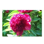 peony Postcards (Package of 8)