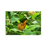 Orange Butterfly Rectangle Magnet