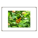 Orange Butterfly Banner