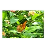 Orange Butterfly Postcards (Package of 8)