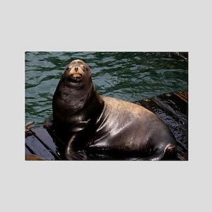 Happy Sea Lion Magnets