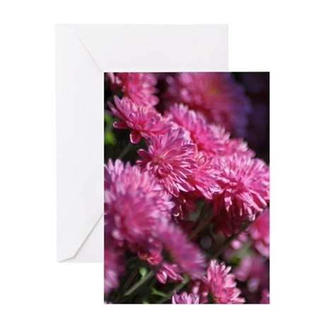 Chrysanthemum Blooms Greeting Cards