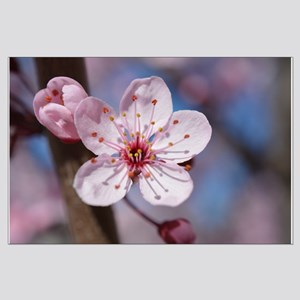 Cherry Blossom Flowers Posters Large Poster