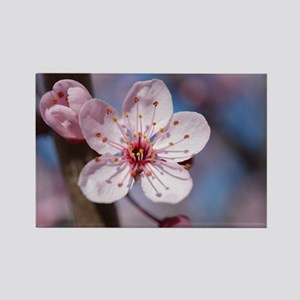 Cherry Blossom Flowers Magnets