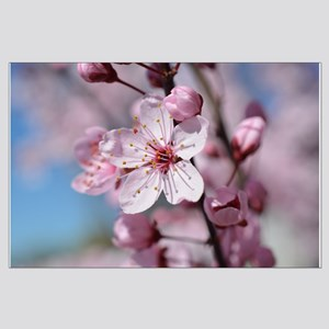 Cherry Blossom Floral Posters Large Poster