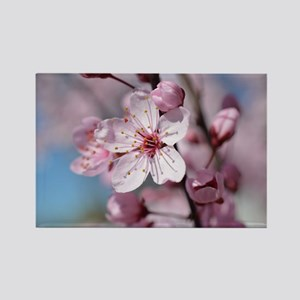 Cherry Blossom Floral Magnets