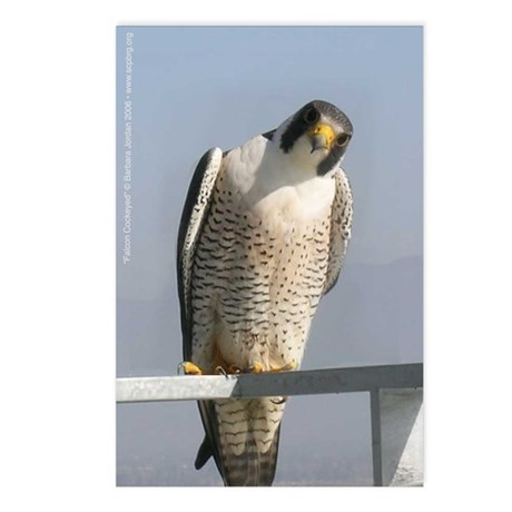 J-102 Falcon Cockeyed Post Cards (Package of 8)