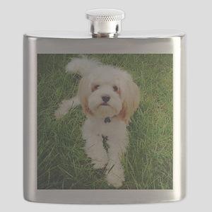 Barney the Cavachon on the grass Flask