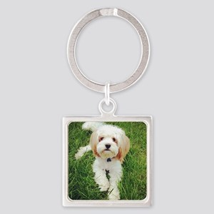 Barney the Cavachon on the grass Square Keychain