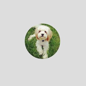 Barney the Cavachon on the grass Mini Button