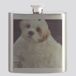 Barney the Cavachon relaxing Flask