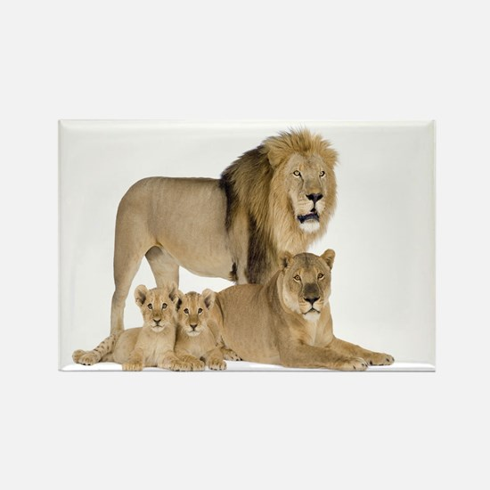 Lions Magnets