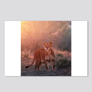 Searching for Cubs Postcards (Package of 8)