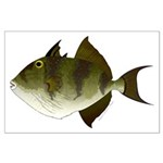 Grey Triggerfish Posters