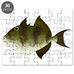 Grey Triggerfish Puzzle