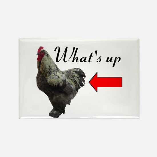 Whats Up Chicken Butt Funny Magnets