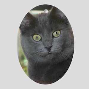 Mez-purr-eyezed Ornament (Oval)