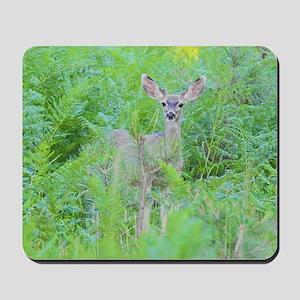Feeling Safe, Young Mule Deer Mousepad