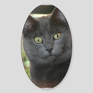 Mez-purr-eyezed Sticker