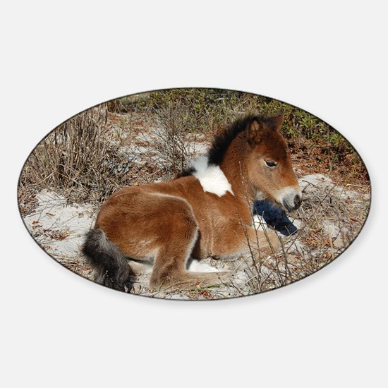 Trots Alot, Wild Horse Decal