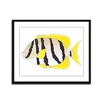 Convict Surgeonfish Framed Panel Print