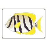 Convict Surgeonfish Banner