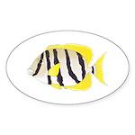 Convict Surgeonfish Sticker