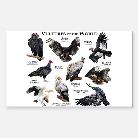 Vultures of the World Sticker (Rectangle)