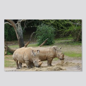 Rhinos Postcards (Package of 8)