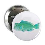 Green Humphead Bumphead Parrotfish 2.25