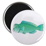 Green Humphead Bumphead Parrotfish Magnets