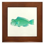 Green Humphead Bumphead Parrotfish Framed Tile
