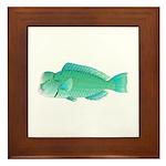 Green Humphead Bumphead Parrotfish Framed Tile