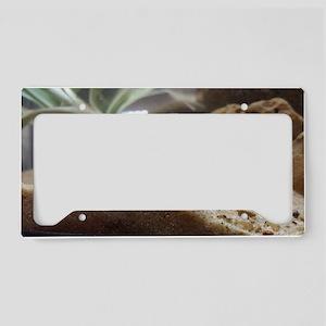 African Mudskipper License Plate Holder