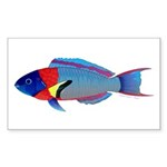 Saddle Wrasse Sticker