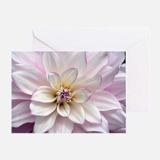 Cool Purple cactus flower petals Greeting Card