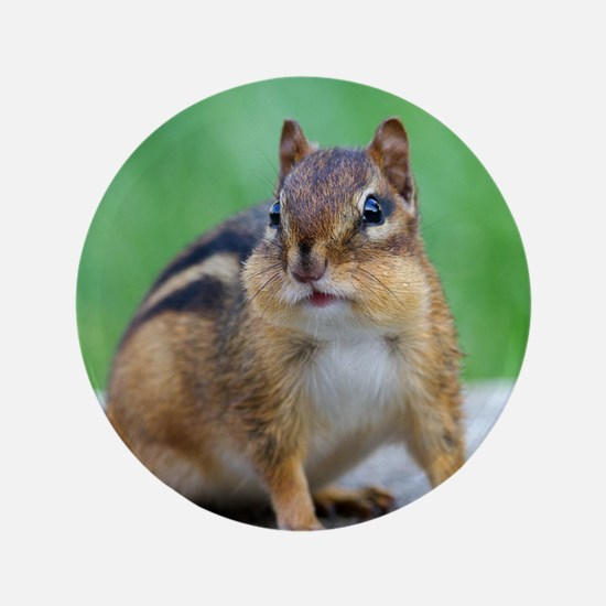"""Chipmunk 3.5"""" Button"""