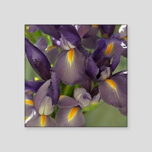 Ballet Purple Iris Flower Photo Sticker