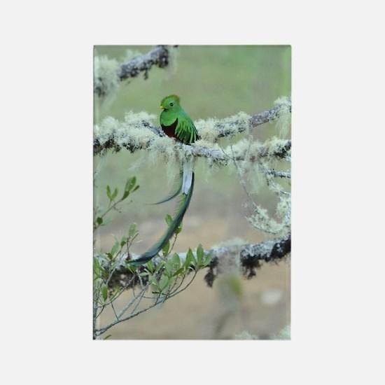 Quetzal Rectangle Magnet