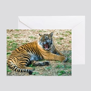 Mad Tiger Greeting Cards (Pk of 10)