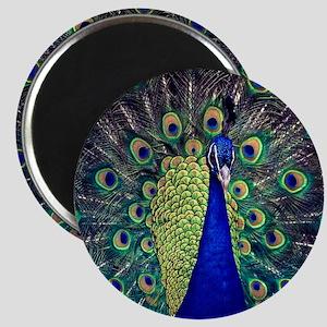Cobalt Blue Peacock Magnets