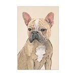 French Bulldog (Sable) Mini Poster Print