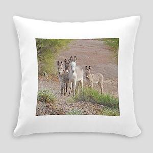 Wild Donkeys, Burros, Lake Pleasant, Arizona Every