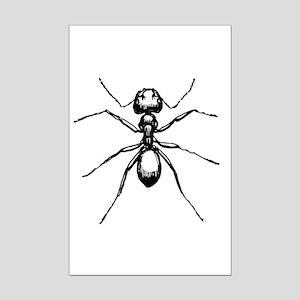 Carpenter Ant Mini Poster Print