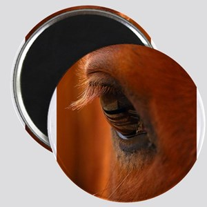 Eye of the Horse Magnet