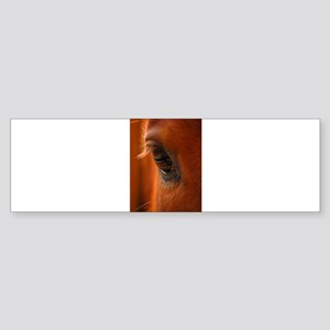 Eye of the Horse Bumper Sticker