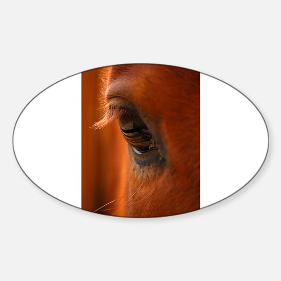 Eye of the Horse Oval Decal