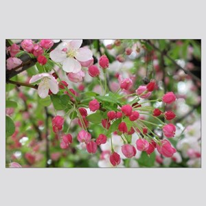 Cherry Blossoms Large Poster
