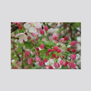 Cherry Blossoms Rectangle Magnet