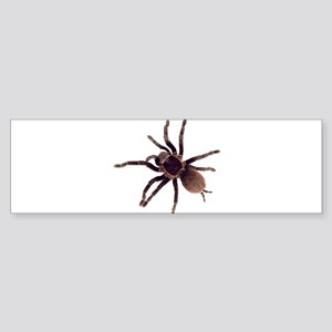 Hairy Brown Tarantula Bumper Sticker